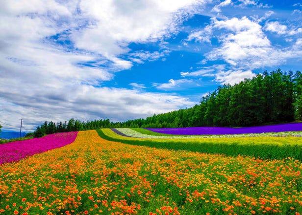 홋카이도 여행 - 홋카이도 계절별 날씨와 기후
