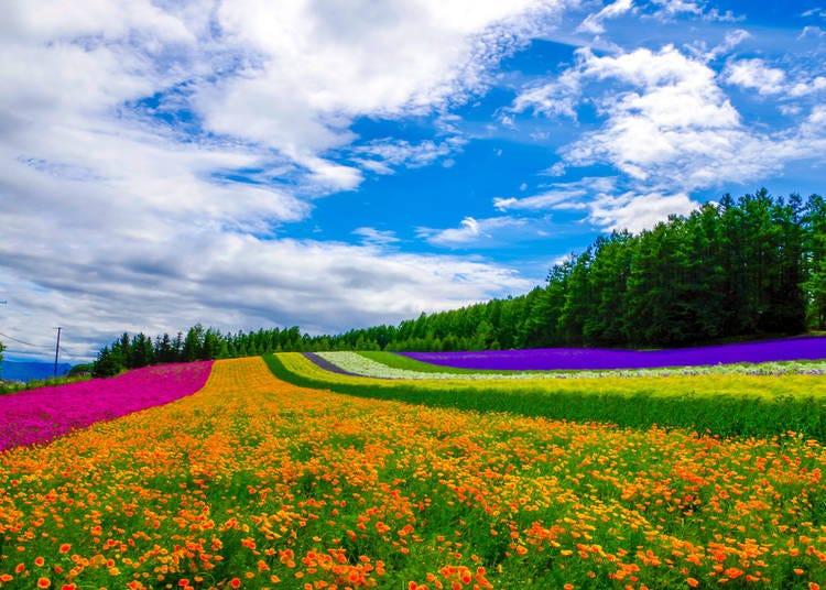 1. Hokkaido's winter temperatures can go below -10℃