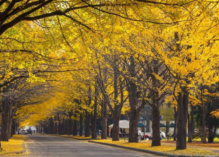 오오도오리 공원