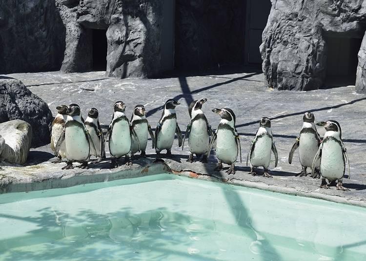 10. Sapporo Maruyama Zoo