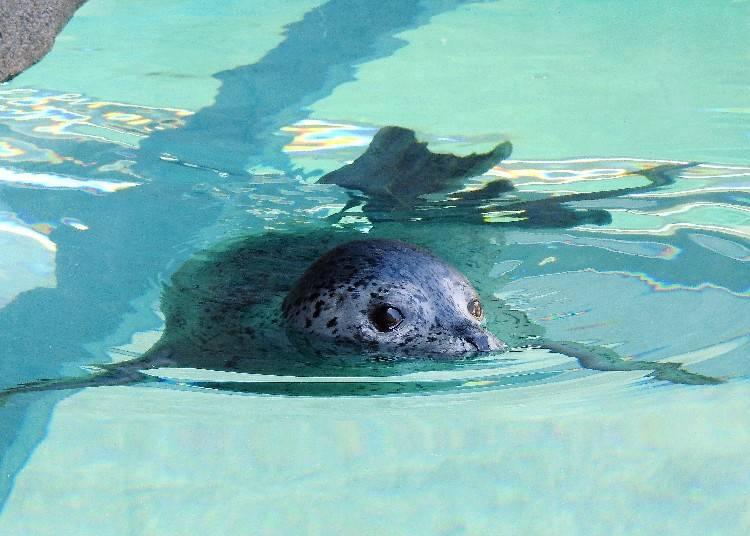 2. Sapporo City Maruyama Zoo: See wild animals up close!