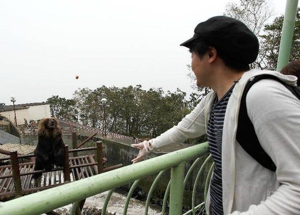 불곰에게 먹이를 주는 스릴 만점 관광지!  '노보리베츠 곰 목장'