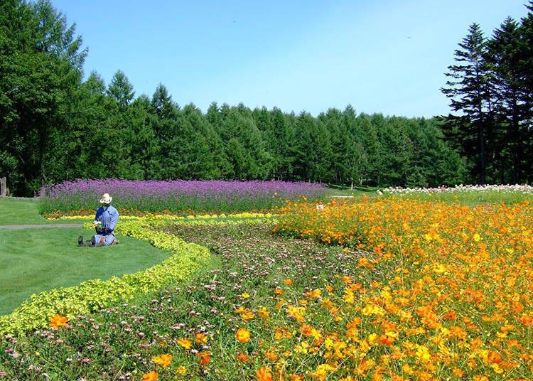 4. Garden, café, activities: Enjoy the use of the picnic garden!