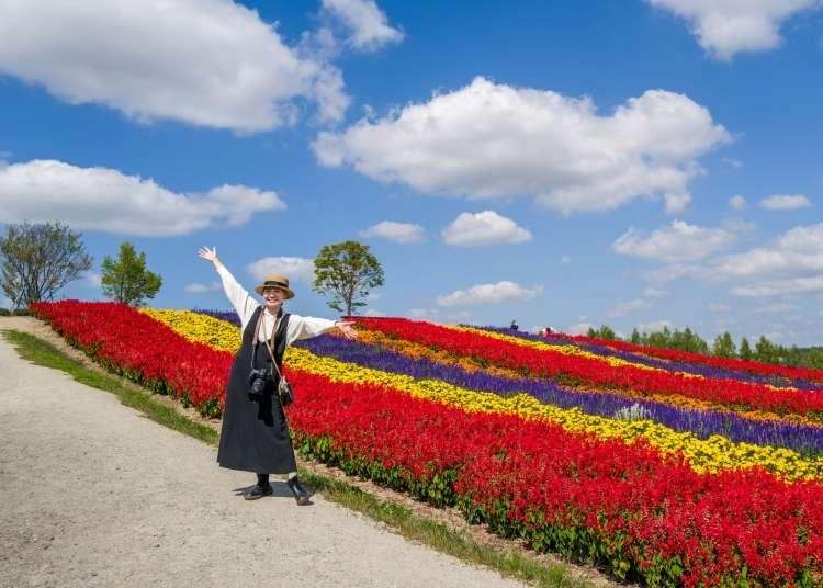 삿포로 비에이 투어 - 북해도 라벤더 여행을 간다면? 이곳에서만 소개하는 [팜 토미타] 꽃밭의 모든것.