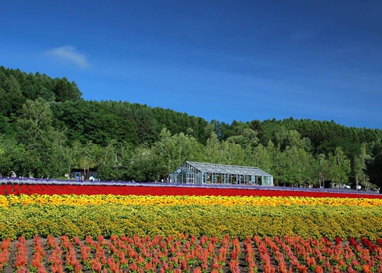 ラベンダー以外にもお花はいっぱい!【ラベンダー以外の花畑 その1】「花人の畑」