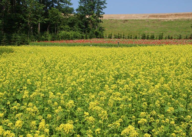 2017年に誕生した「山の彩りの畑」など個性あふれる花畑がいっぱい!