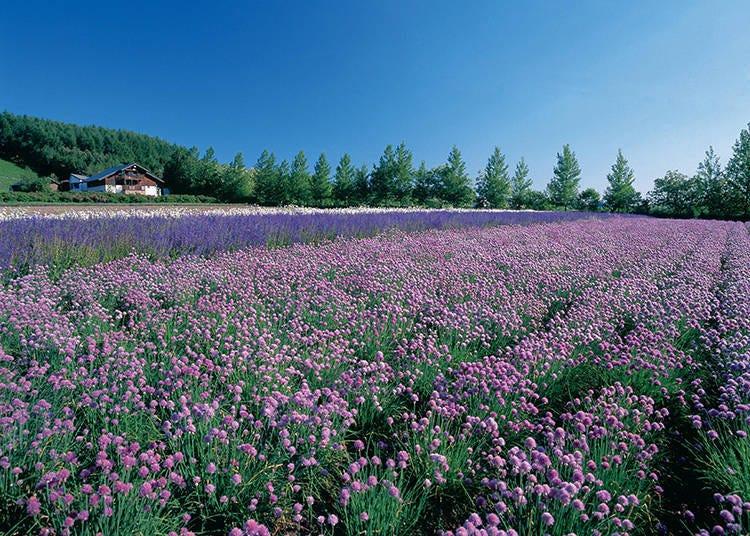 【라벤더 이외 꽃밭 세 번째】 [봄 이로도리 밭]과 [가을 이로도리 밭]