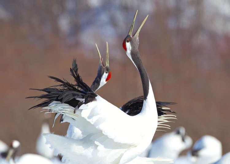 「釧路湿原」ってどんな場所?観光スポットや楽しみ方を徹底紹介