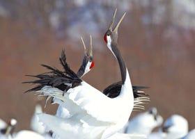 홋카이도 쿠시로 습지여행에 대한 기본지식과 여행팁 정리!