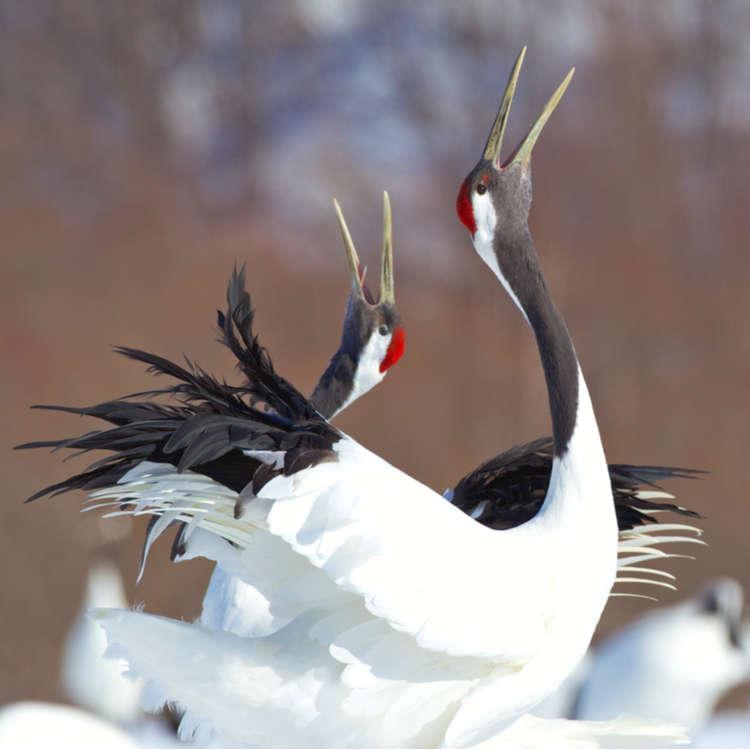 쿠시로 습지에 대한 기본 지식과 여행 팁을 빠짐없이 소개한다!