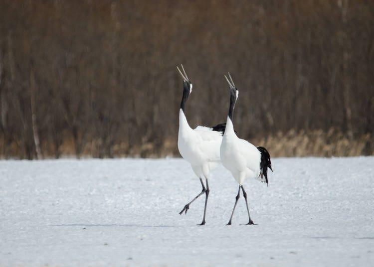 2. Nature and Wildlife in the Kushiro Wetlands