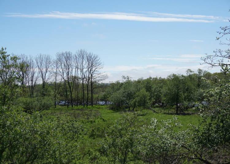 4:湿原内はどうなっている?