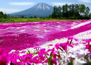 Spectacular Scenic Spots around Niseko and Yoteizan