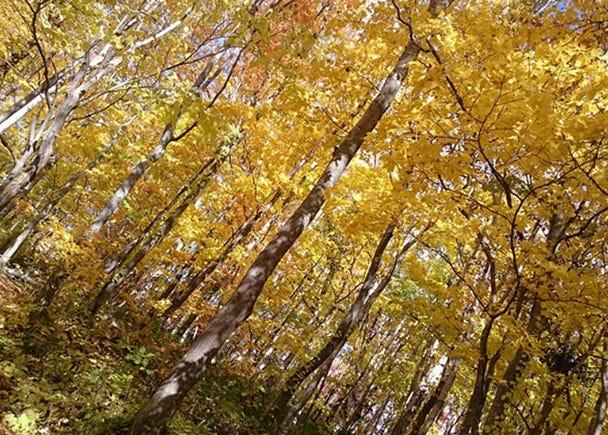 5. Mount Yotei's Mizu no Teien (Water Garden): Don't miss the autumn leaves!