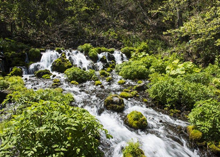 Spring water from Mt. Yotei flowing vigorously all through Fukidashi Park