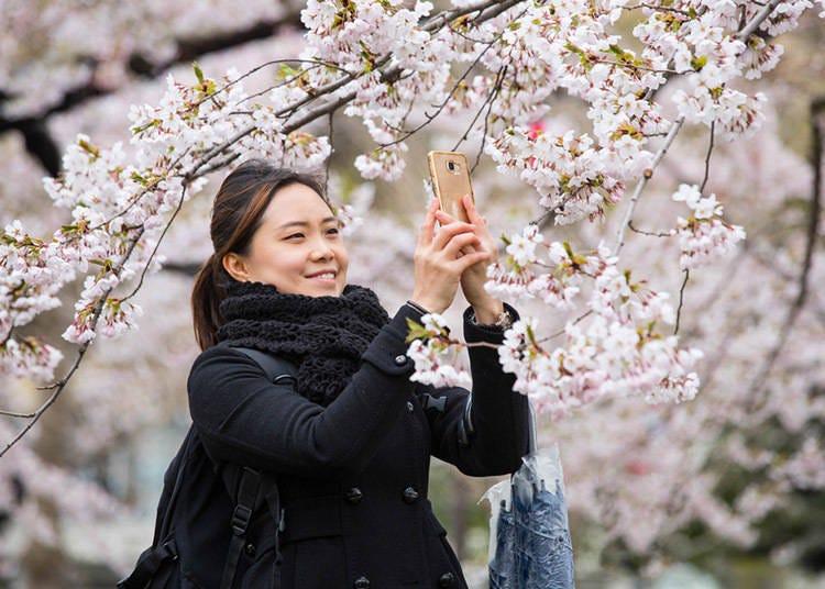 【北海道的春季(3月、4月、5月)】 3月甚至还有气温零下的日子。东京4月就开樱花了,但北海道的樱花季是5月!