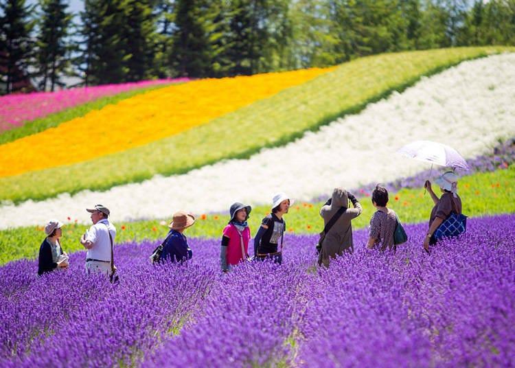 北海道夏天(6月、7月、8月)季節性活動