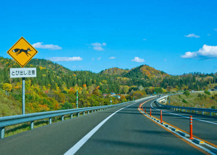 5. How can I rent a car for my trip in Hokkaido?