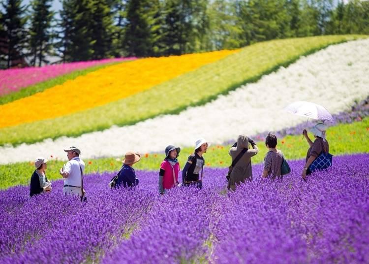 Q. 홋카이도를 만끽하는 투어를 이용