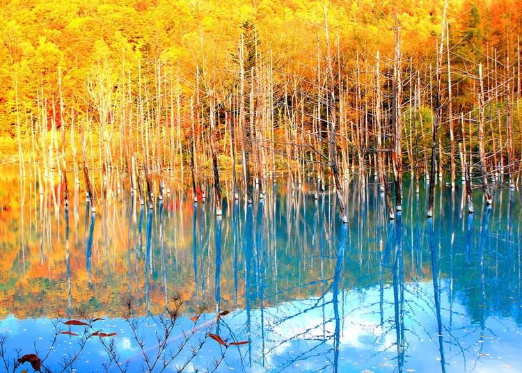 【北海道的秋季(9月、10月、11月)】 从秋天开始气温急速下降,早晚温差大