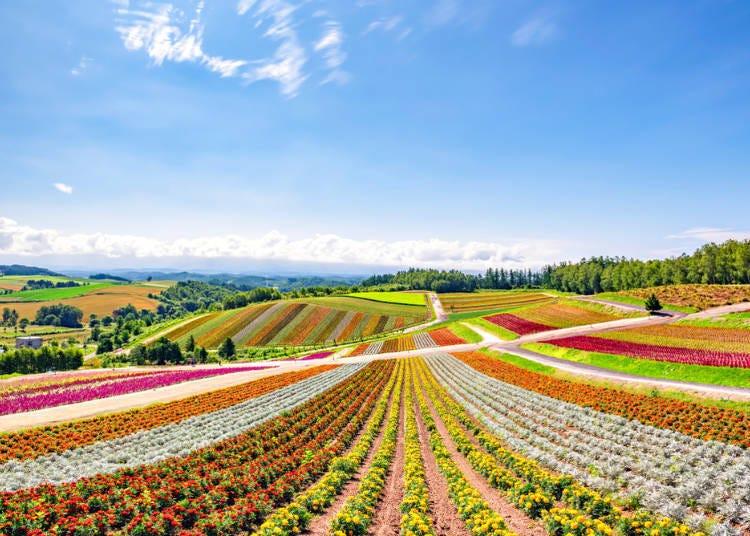 Why visit Hokkaido?