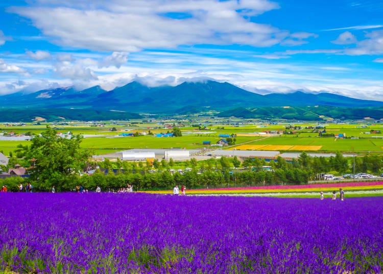 ラベンダー畑や大自然を楽しみたいなら「旭川・富良野」に泊まる