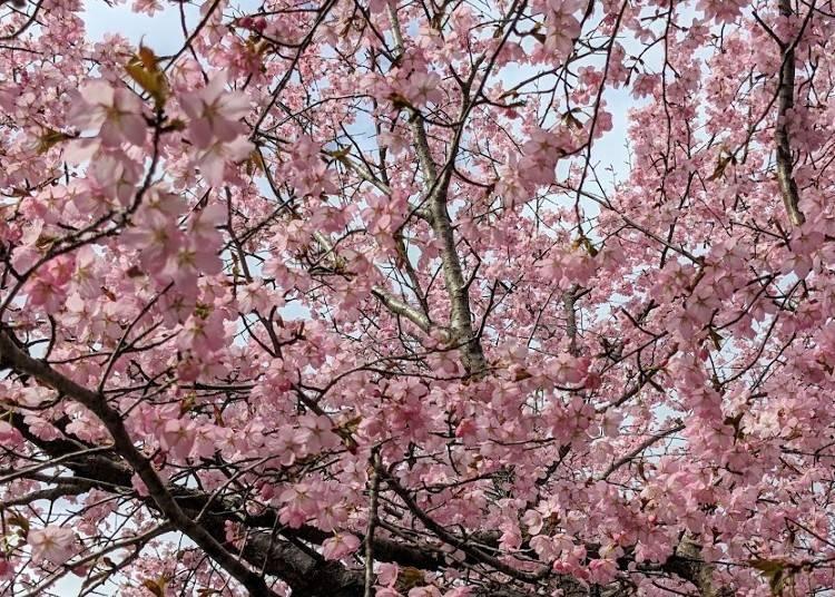 ■北海道の春 3月~5月