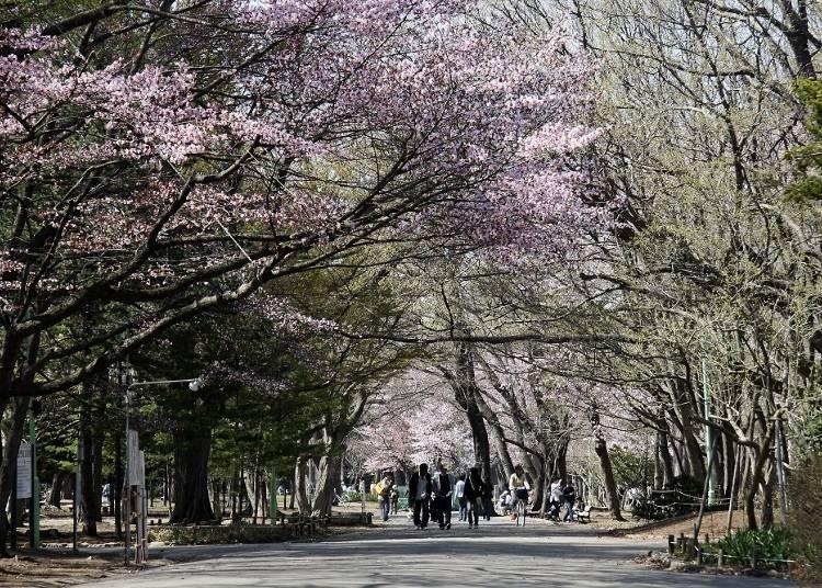 春のおすすめの観光地
