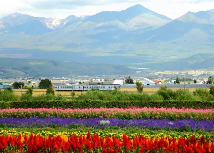 Travel Hokkaido by Train! Ultimate Guide to the Hokkaido Rail Pass and Seasonal Sightseeing Trains