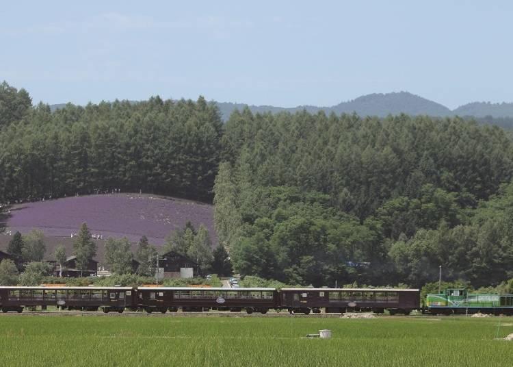 一邊享受微風一邊眺望一整片薰衣草花園!季節限定列車 2)富良野・美瑛noroko號(富良野・美瑛ノロッコ号)」