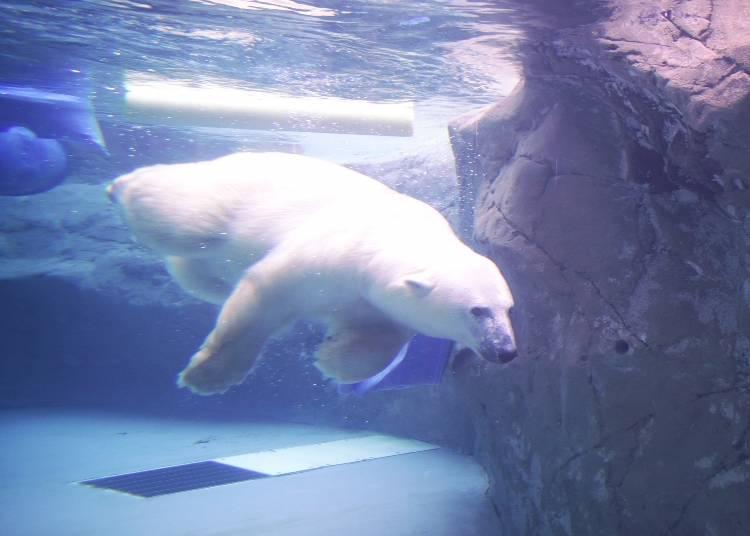 人気観光地へのアクセス1:旭山動物園