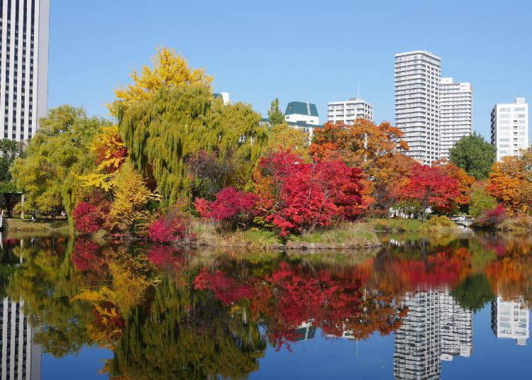 北海道賞楓景點⑤札幌市民的休閒娛樂好地方!「中島公園」的楓葉景色