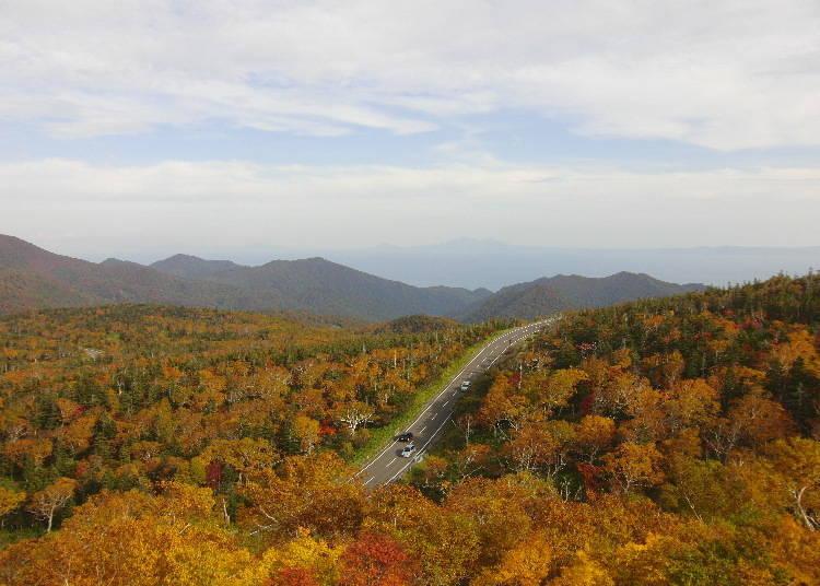 北海道賞楓景點⑧橫跨「知床」秘境生氣蓬勃的楓葉