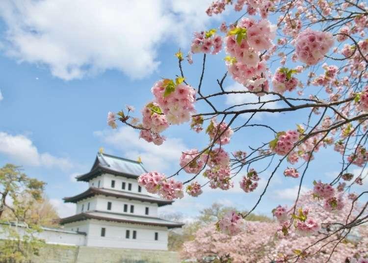 【2020年版】北海道の桜の名所8選【道南~道東】
