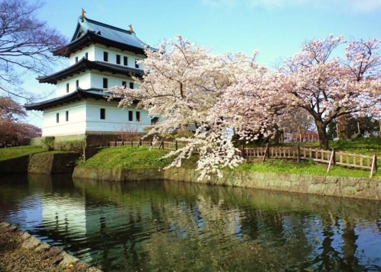 1.1万本の桜がおもてなし「松前公園」【道南】