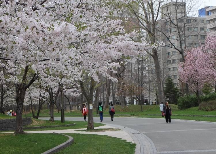 8. 역사적인 건물과 벚꽃의 콜라보레이션을 즐길 수 있는 「나카지마 공원」【도오]
