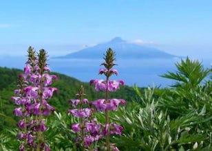 Trekking Around Rebun, Japan's Legendary 'Floating' Island of Flowers