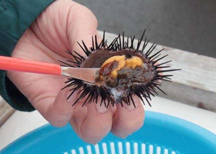리시리도에서 성게 어부 체험! 직접 잡은 성게를 회나 군함말이로 즐겨 보자.