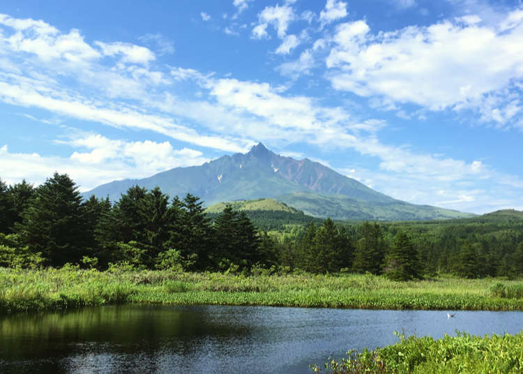 到「白色戀人」包裝上所繪製的北海道利尻山,來趟大自然美景之旅吧!