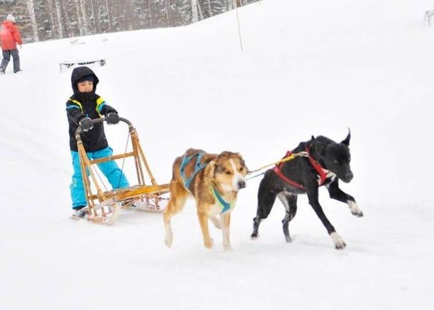 Fun snow activities unique to Hokkaido Rusutsu Resort