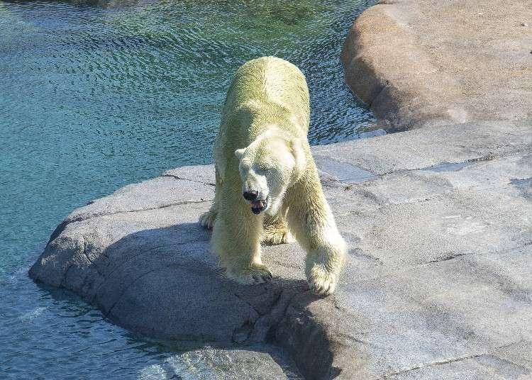 풍요로운 자연 환경을 갖춘 홋카이도 '삿포로시 마루야마 동물원'에 새로운 코끼리가 찾아 왔다!