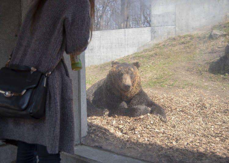 Native Animals of Hokkaido