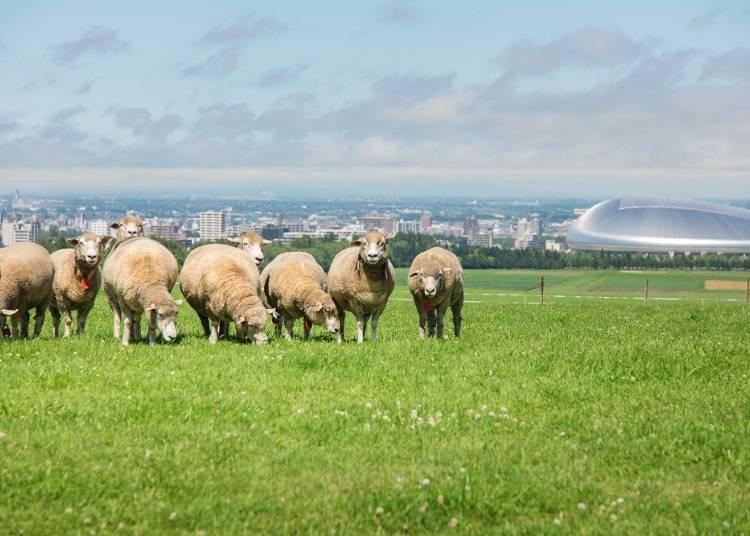 丘から街を一望「さっぽろ羊ヶ丘展望台」