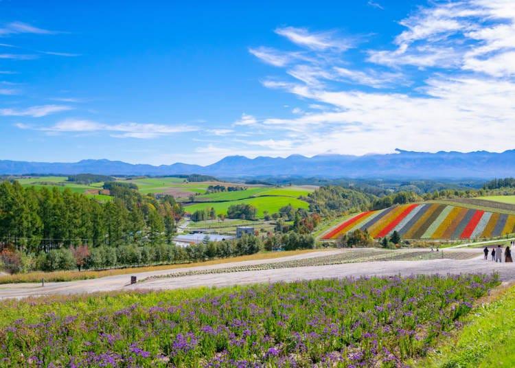광대한 전원 풍경과 밭의 축복