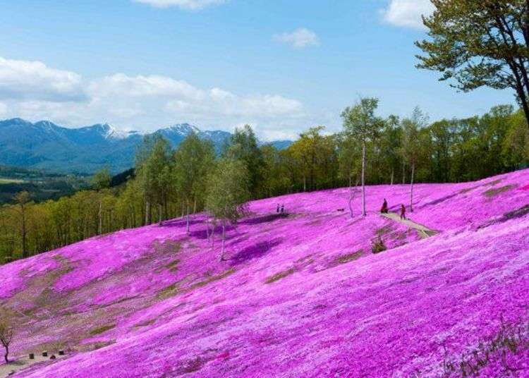 Scenic Japan Drives: Spring Along Hokkaido's Stunning 200km 'Flower Road'!