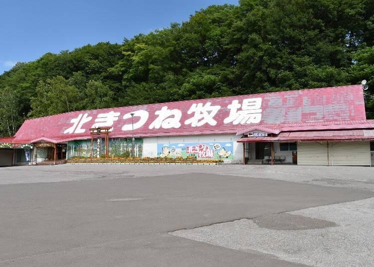 在日本只有北海道才有北狐