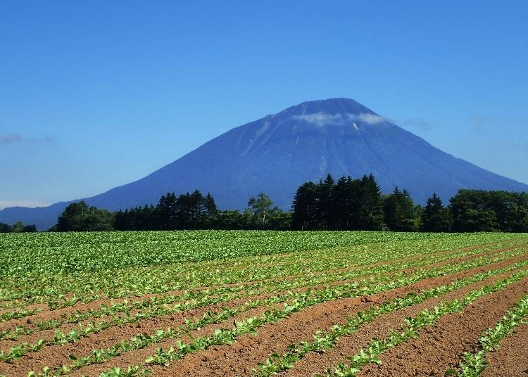 Mt. Yotei is a good example of a Hokkaido Mt. Fuji!