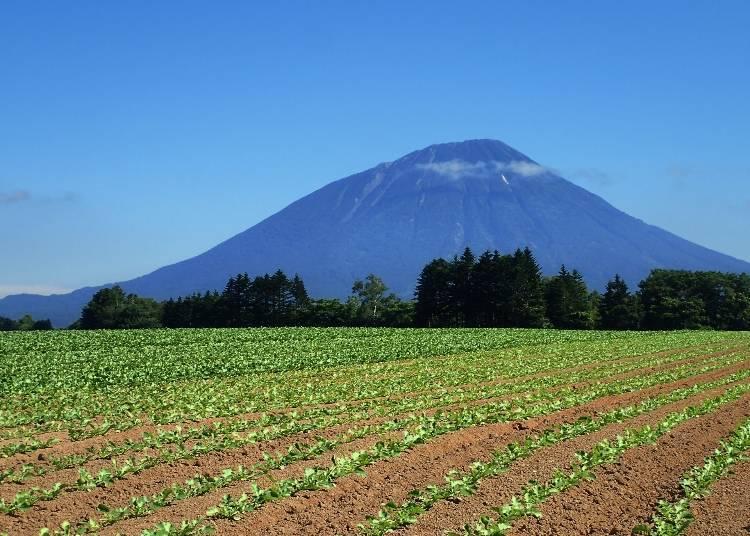 홋카이도의 후지산이라고 하면! '요테이산'