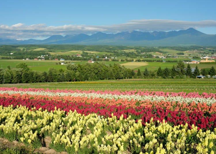 Winter isn't the only beautiful season! Hokkaido is full of stunning scenery year-round