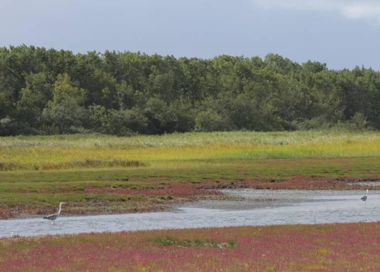 夕日とサンゴ草の赤「キムアネップ岬」
